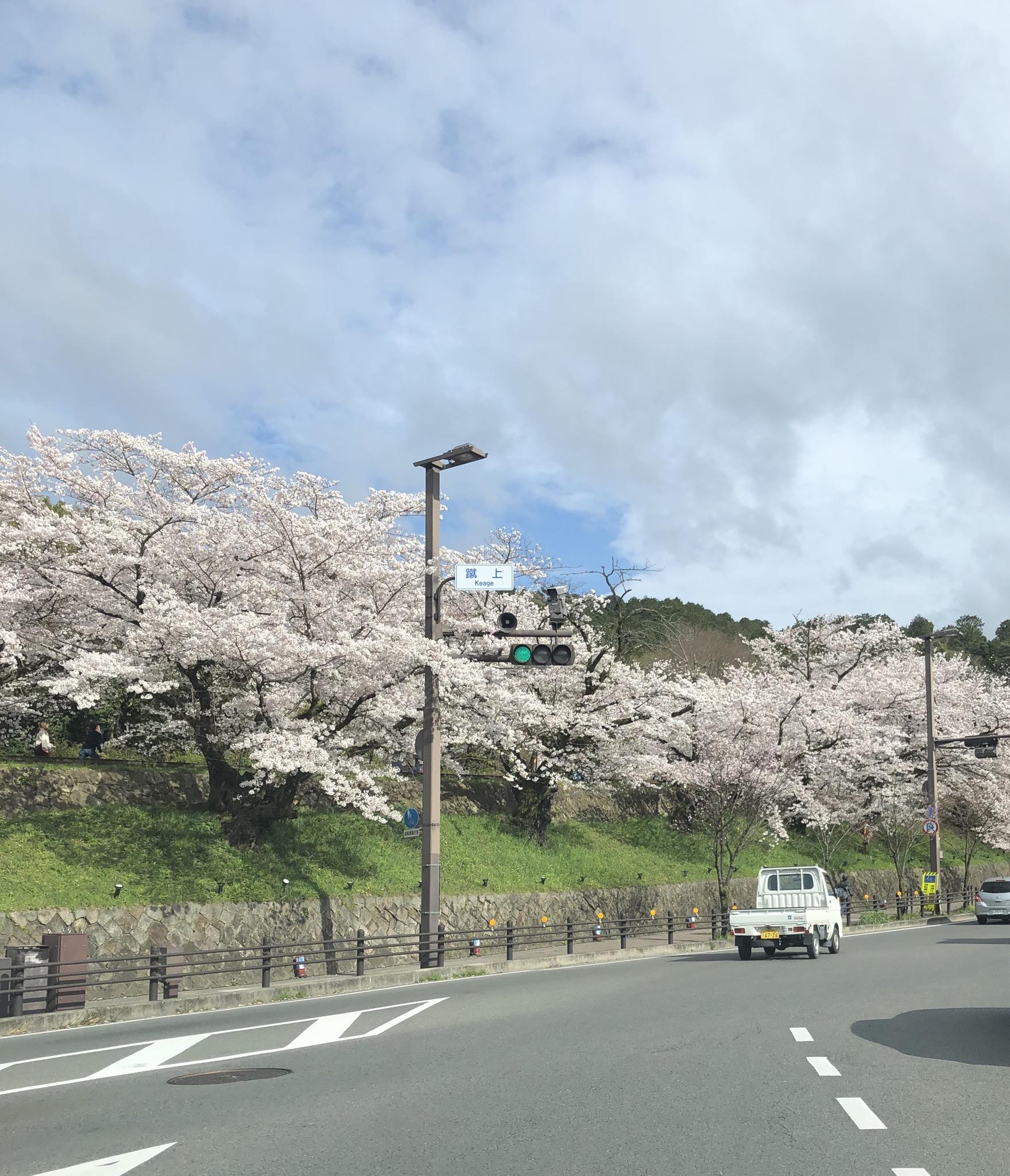 車窓からの花見